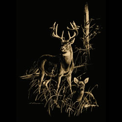Buck Doe